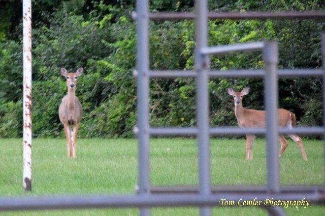 deer-run-morning-018