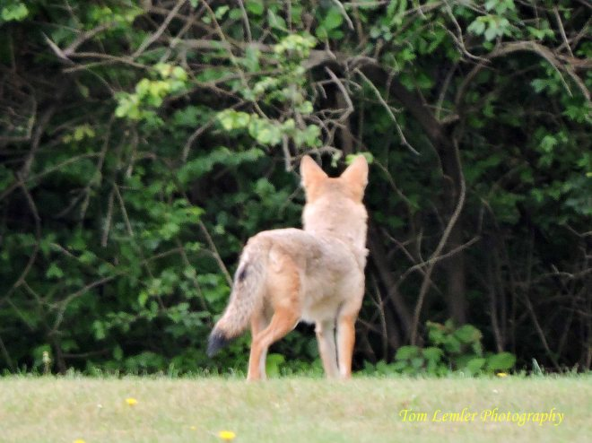 Wildlife 006.jpg