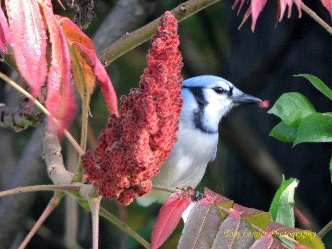 Birds 008.jpg