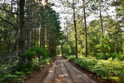 Rabbit Patch Road